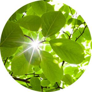 De milieuwetgeving is een regelmatig veranderend kluwen. Reken op onze milieudeskundigen voor ondersteuning, tips en de meest recente (wets)informatie.